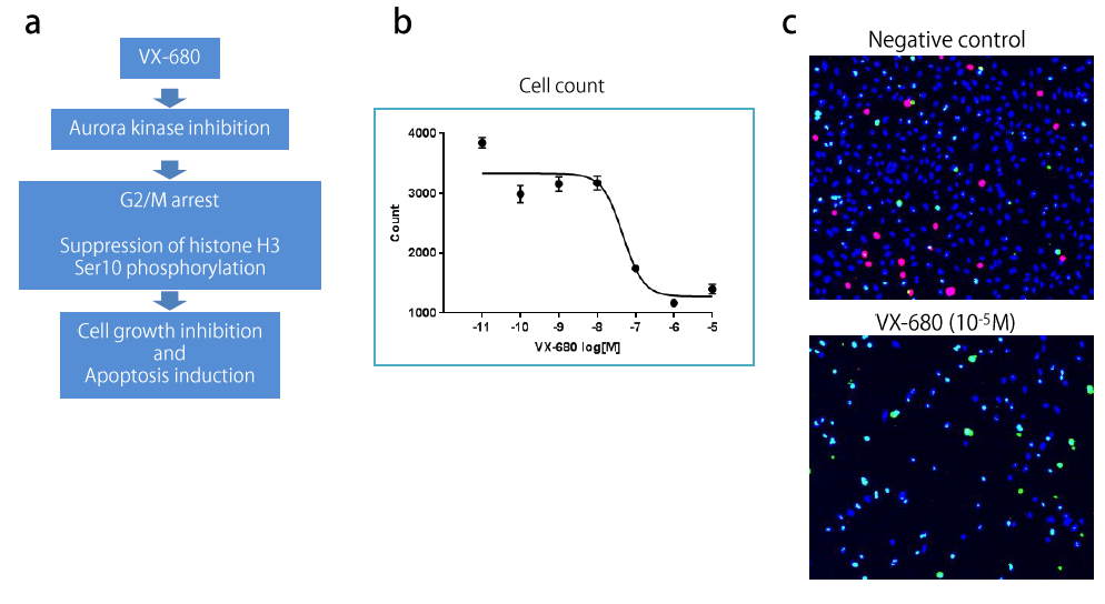 Figure 1. Molecular mode of action of VX-680 and its effect on HeLa cells.