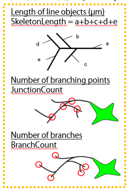 Length of line objects