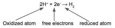 3.3 Eq: Oxidized atom, free electrons, reduced atom