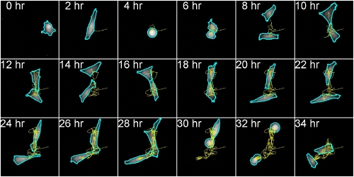 Tracking of individual cell with gravity center tracing