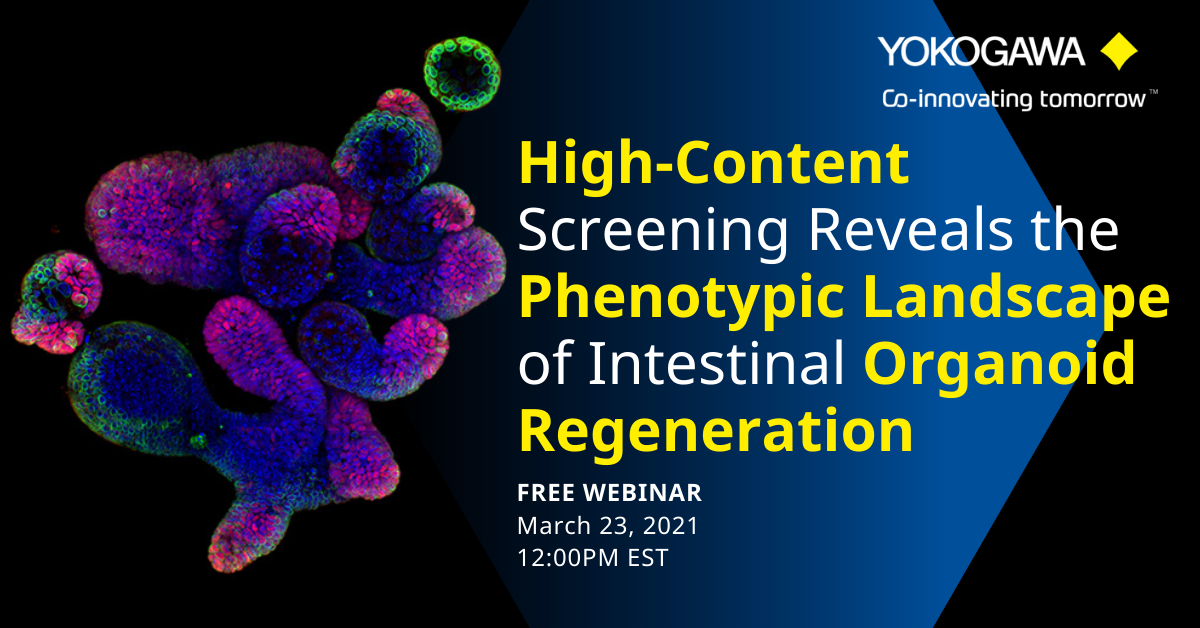 High content screening reveals the phenotypic landscape of intestinal organoid regeneration webinar | Yokogawa Life Innovations