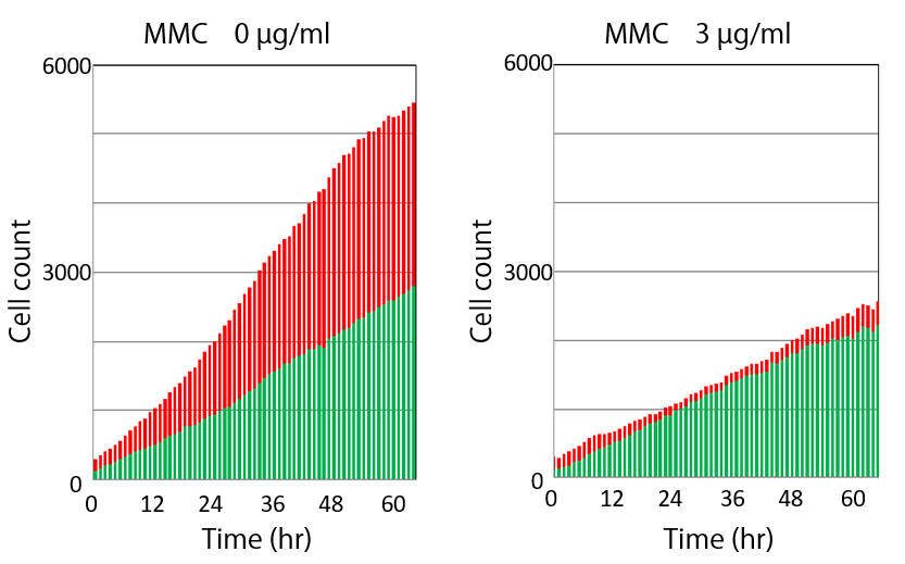 Figure 2. Temporal change of the number of cells in the cell-free gap