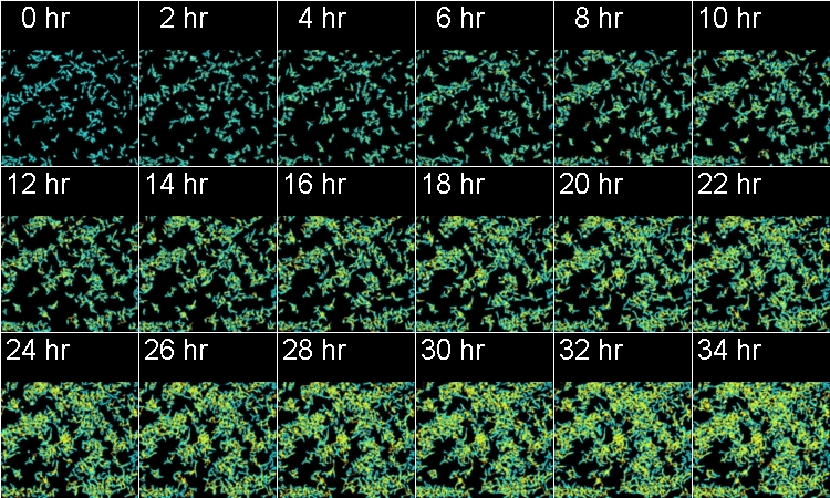 Time-series images of the cells to show recognition of individual cell