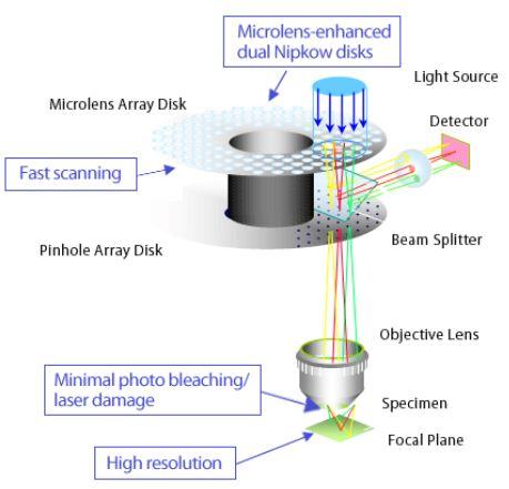 microlens / fastsacnning / minimal photo bleach / high resolution